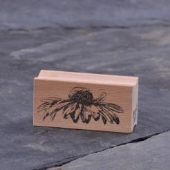 Echinaceabluete