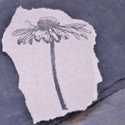Stempelabdruck-Echinacea