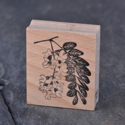 Stempel-Robinienbluete