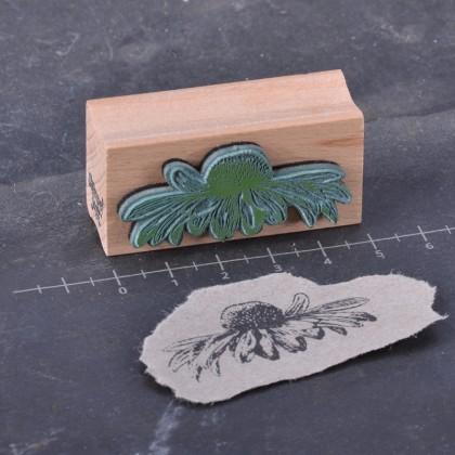 Rueckseite-Echinaceablüte