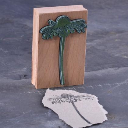 Rueckseite-Echinacea