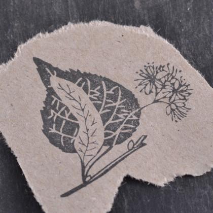 Stempelabdruck-Lindenbluete