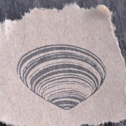 Stempelabdruck-Muschel