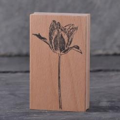 Stempel-Tulpe