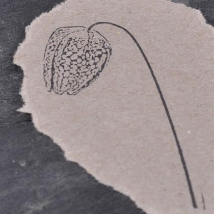 Stempelabdruck-Schachbrettblume