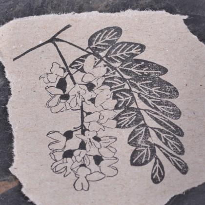 Stempelabdruck-Robinienbluete