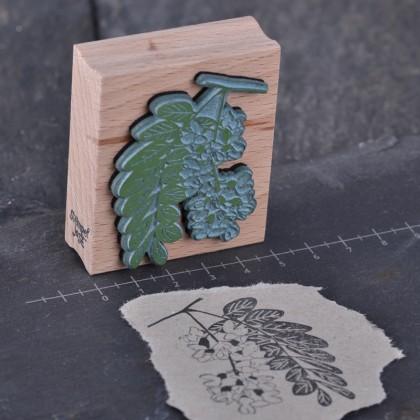 Stempelgummi-Robinienbluehte