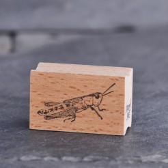 Stempel-Grashuepfer
