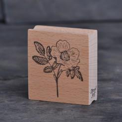 Stempel-Rose