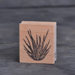 Stempel-Zebra-Kaktus