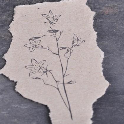 Stempelabdruck-Glockenblume