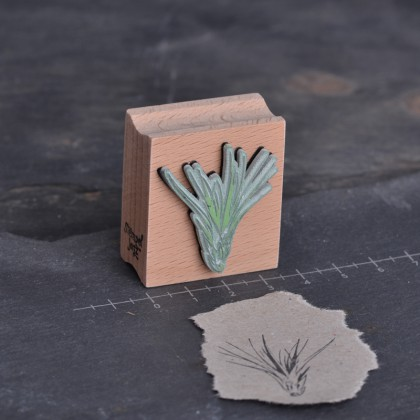 Stempelgummi-Luftpflanze